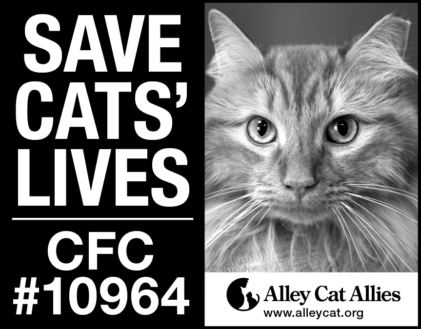 Alley Cat Allies ad