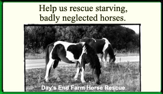 Days End Farm Horse Rescue, Inc. Ad