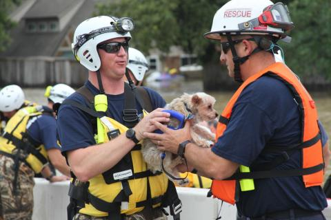 Pet rescue during Hurricane Harvey